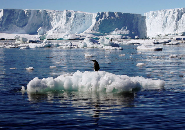 新西兰发现巨型史前企鹅 身高1米7
