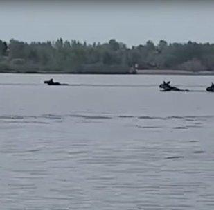 麋鹿橫渡伏爾加河