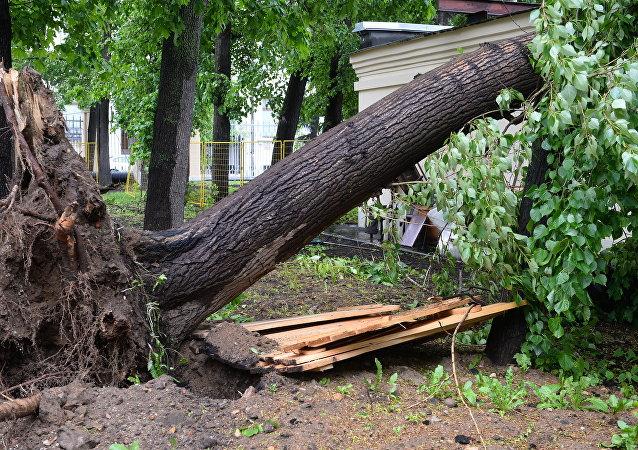 目前仍有近110人因莫斯科狂风天气而住院 其中包括22名儿童