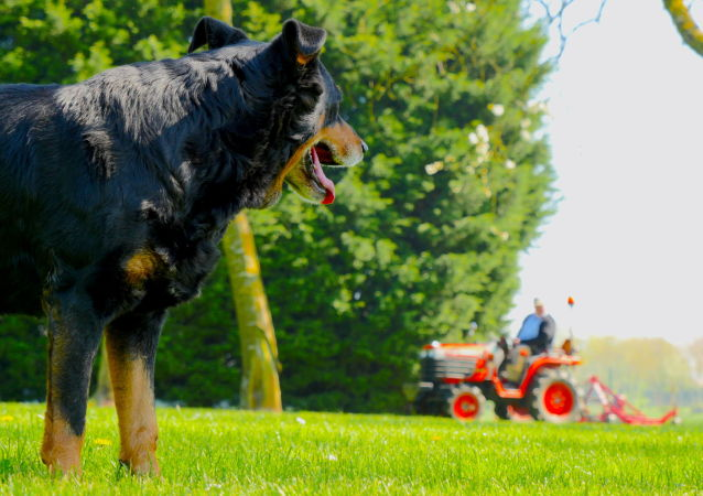 英国的一只狗驾驶拖拉机轧死了自己的千万富翁主人