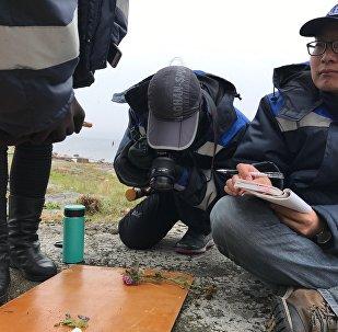 芬兰湾索莫斯岛:会是地理学家和游客的新发现