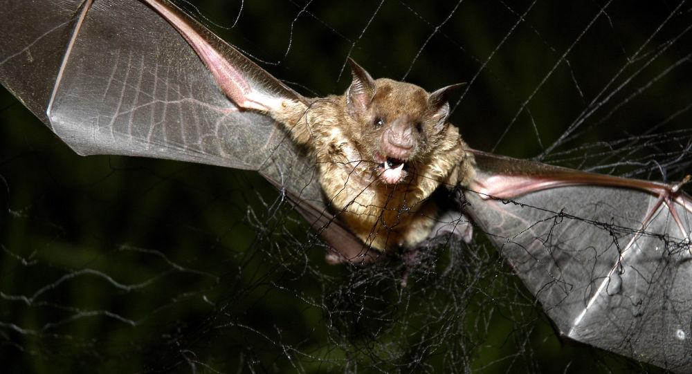 澳洲遭遇最强热浪 数千蝙蝠被热死