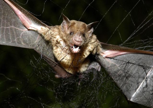 澳洲遭遇最強熱浪 數千蝙蝠被熱死