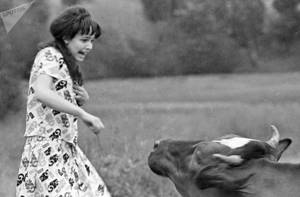 被牛追的女子