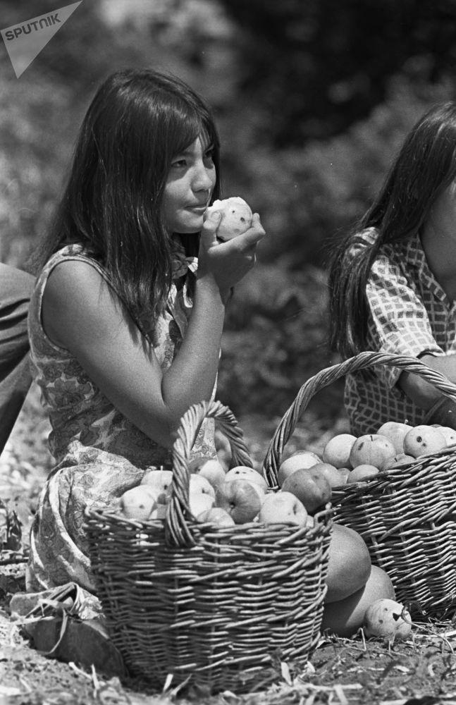 施工队的一名女孩在摘苹果