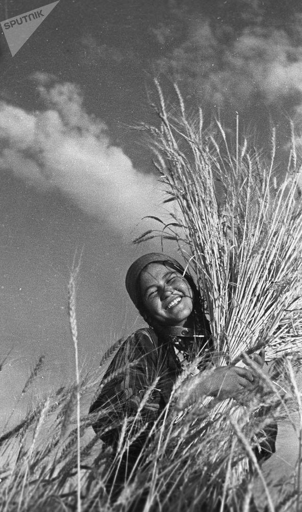 在地里收庄稼,土库曼苏维埃社会主义共和国,1939年