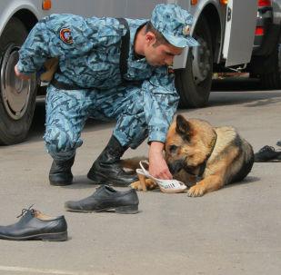 訓犬員和警犬是一個團隊,不斷完善自己的專業技能。
