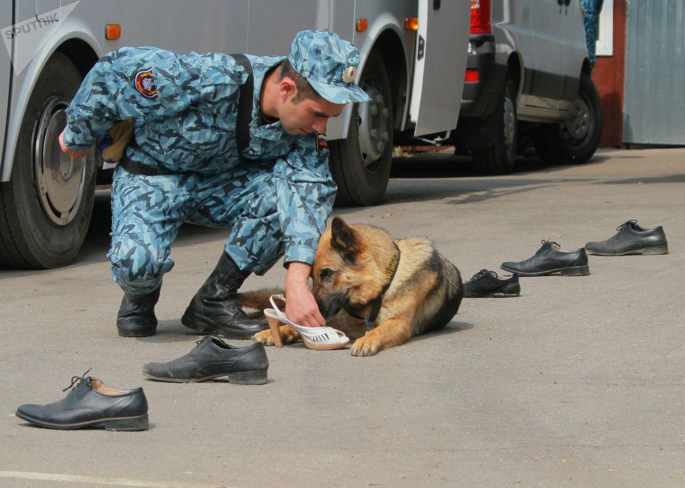 训犬员和警犬是一个团队,不断完善自己的专业技能。