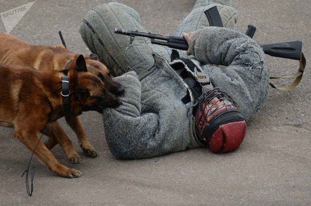 每只警犬都要接受专业训练。