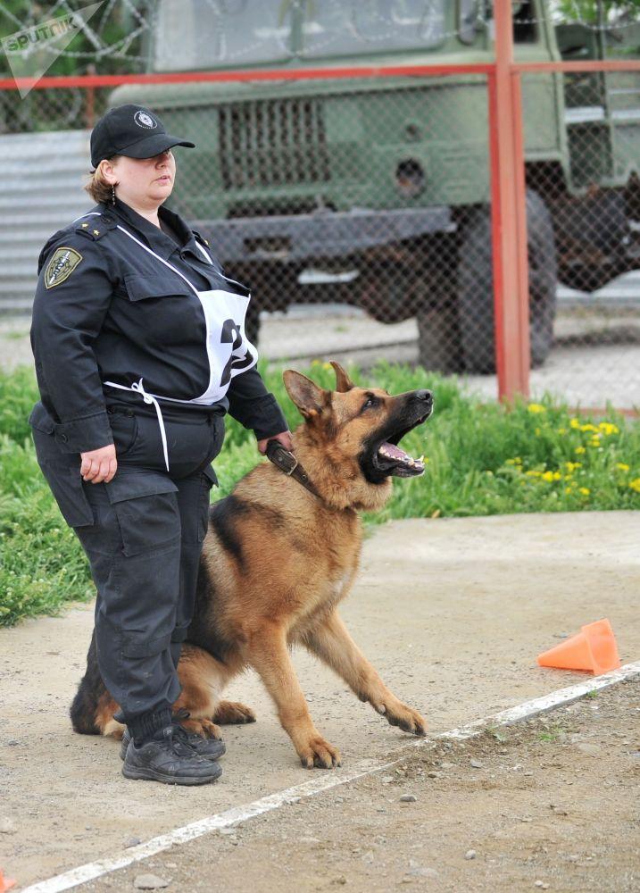 警犬工作条件有相关规定。例如,当气温达到零上30 °С或零下20 °С时,户外连续工作时间不应超过4个小时。