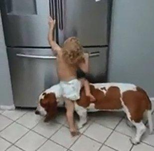 小狗成「幫凶」半路棄「同伙」而去