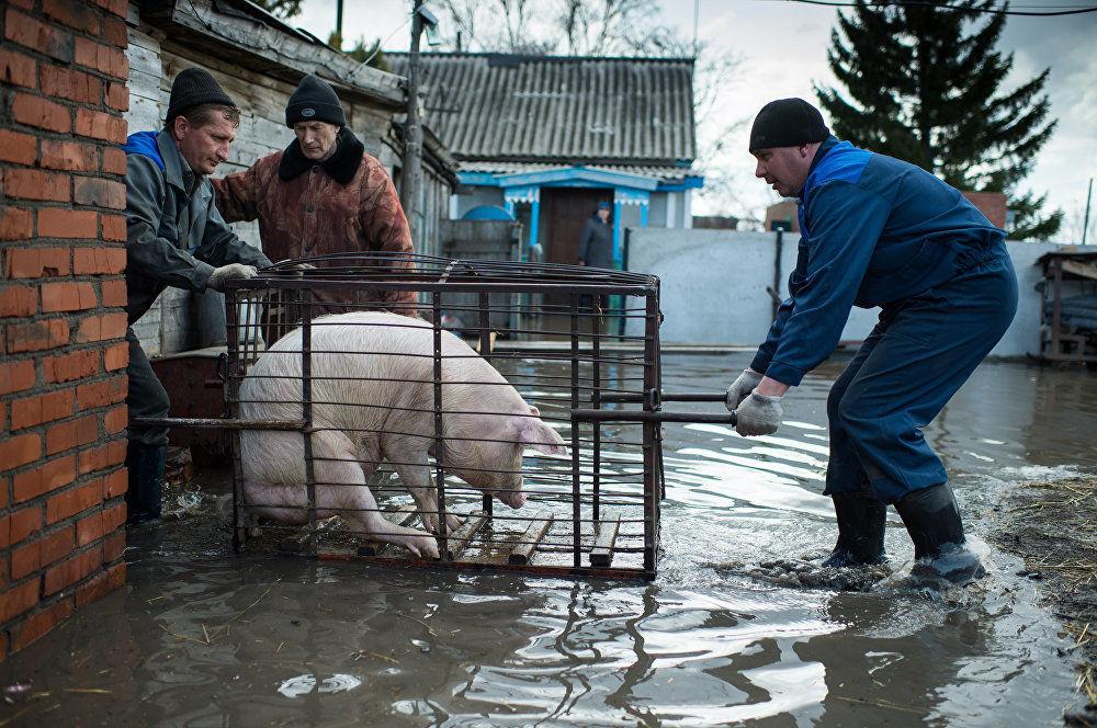 """""""春汛"""",阿列克谢·马利科夫卡,俄罗斯。图为:鄂木斯克州一栋被淹没的房子。"""