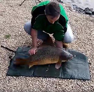 到手的魚就這麼沒了