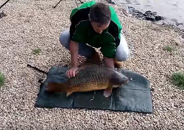 到手的鱼就这么没了