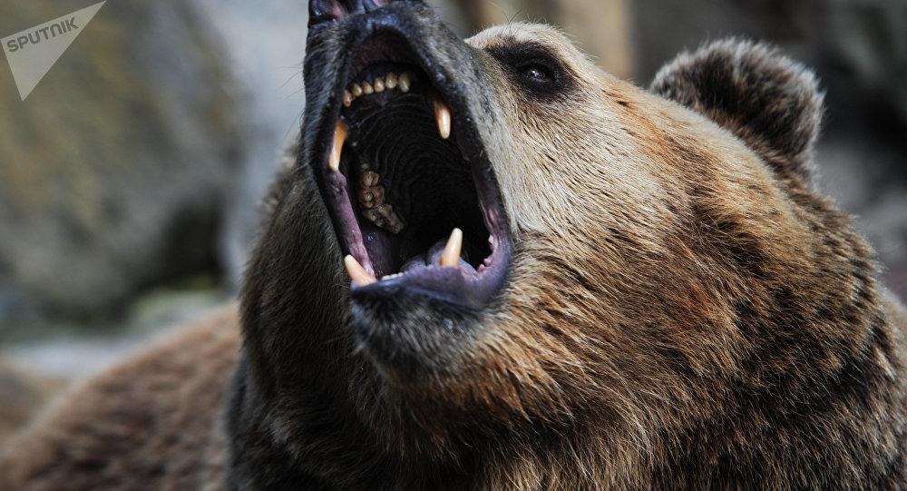 堪察加居民在一头死熊旁发现男子尸体