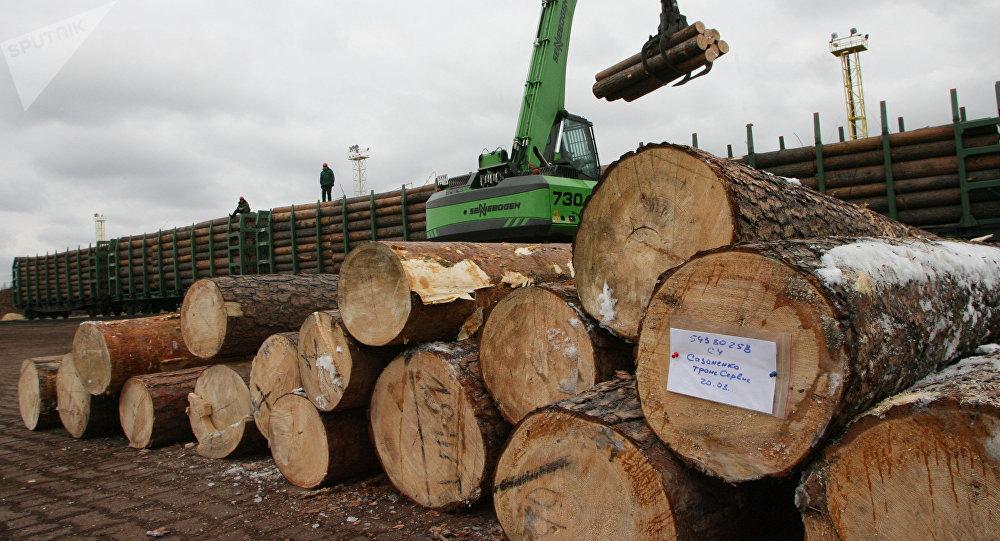 中国吉林森工集团计划在俄远东建设木材工业园