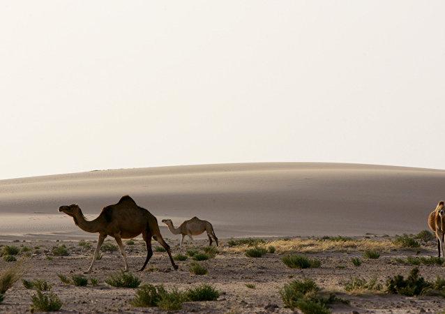 挪威科学家想借助海水和太阳能绿化撒哈拉沙漠