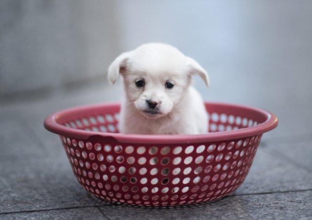 媒体:中国自主培育出世界首例基因编辑克隆犬 (资料)