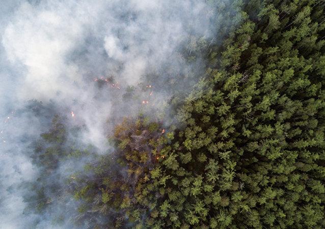 俄西伯利亚森林火灾面积一昼夜扩大一倍