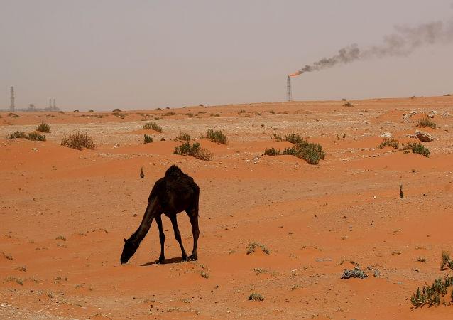 媒体:数万匹骆驼成为卡塔尔与阿拉伯国家之间冲突的牺牲品