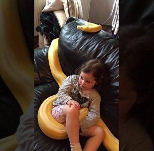 4岁女孩在蟒蛇怀里看电视 怎么可以这么和谐