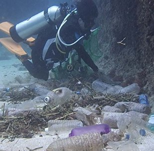 潜水员充当清道夫海底拾垃圾