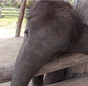 小象怎么都叫不醒熟睡狗 隔着屏幕都能感受到无奈