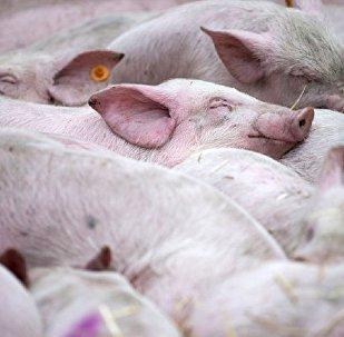 中国养殖业严禁使用抗生素