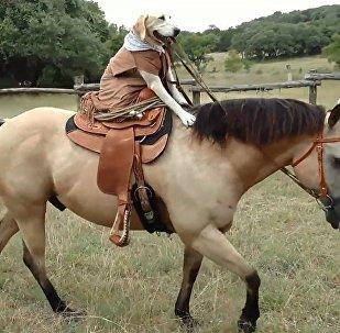 得州女子教狗骑马