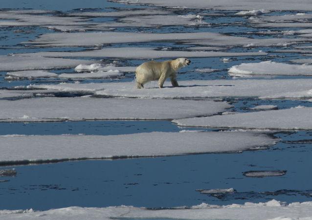 中俄海洋与气候联合研究中心将推动两国在北极科考等领域合作