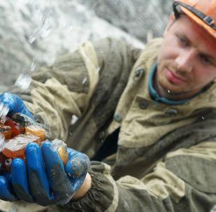 加里寧格勒琥珀聯合企業開採出的琥珀