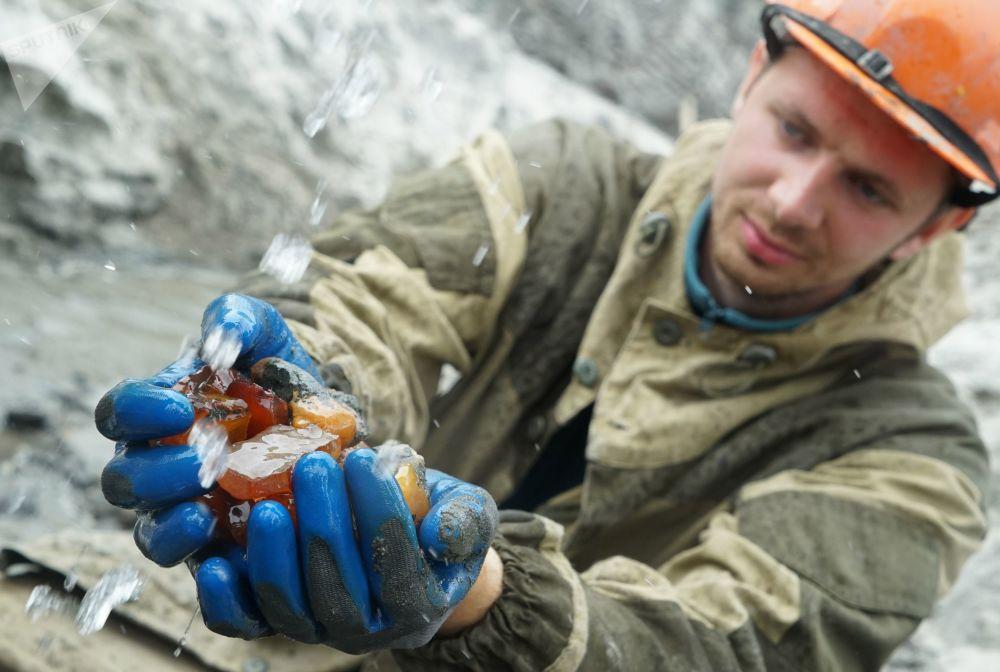 加里宁格勒琥珀联合企业开采出的琥珀