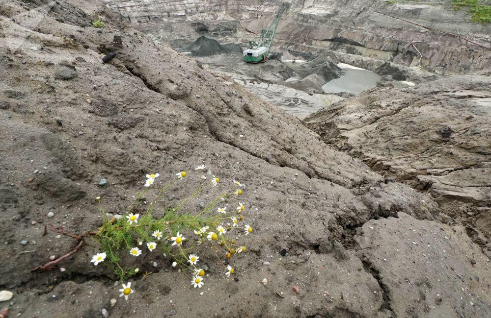 加里宁格勒琥珀联合企业的采石场