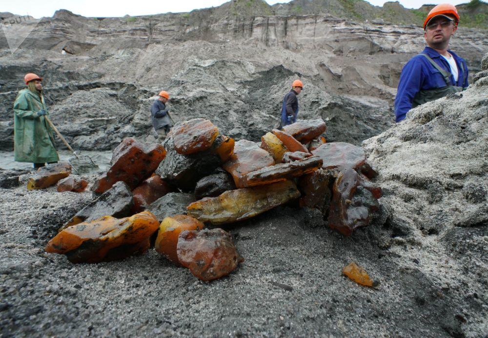 在加里宁格勒琥珀联合企业采石场内进行琥珀开采