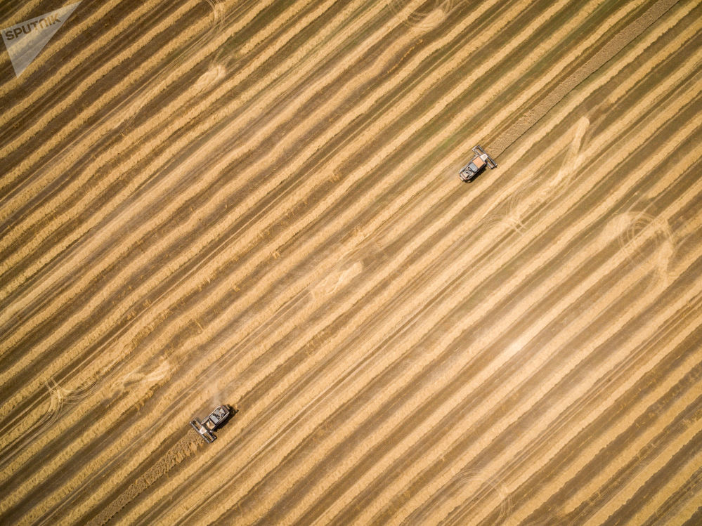 克拉斯诺达尔边疆区收麦子时的设备
