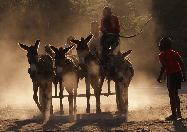 Donkey cart moving on the dusty roads in Zimbabwe