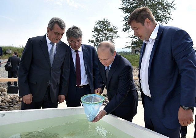 普京向贝加尔湖投放秋白鲑鱼苗