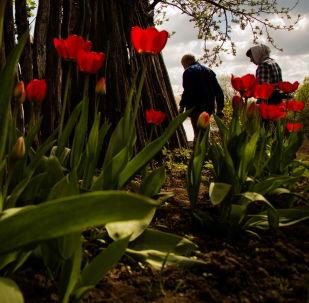 斯韋特蘭娜·塔拉索娃組照《花園》之一,「我的星球」類三等獎