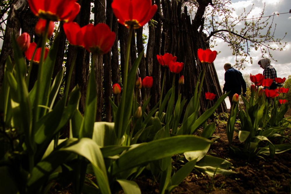 """斯韦特兰娜·塔拉索娃组照《花园》之一,""""我的星球""""类三等奖"""