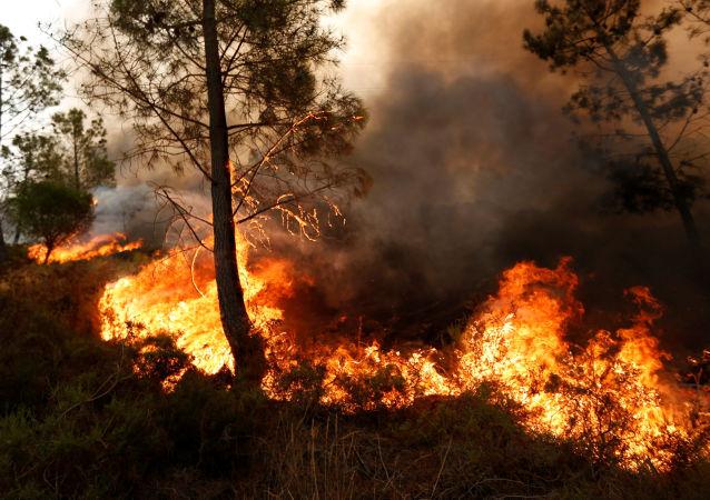 媒体:美国加州森林火灾致百余人受伤