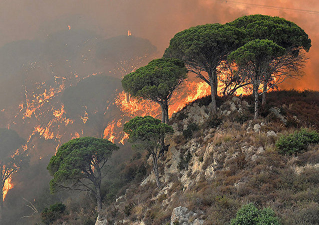 意大利森林大火