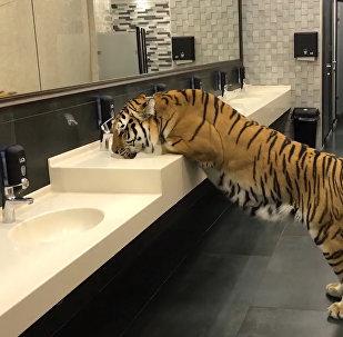 一場出乎意料的「邂逅」:男子公廁遇母老虎