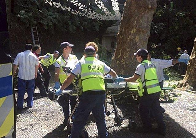 蜜環菌蘑菇是馬德拉島200年老橡樹倒下並砸死人的罪魁禍首