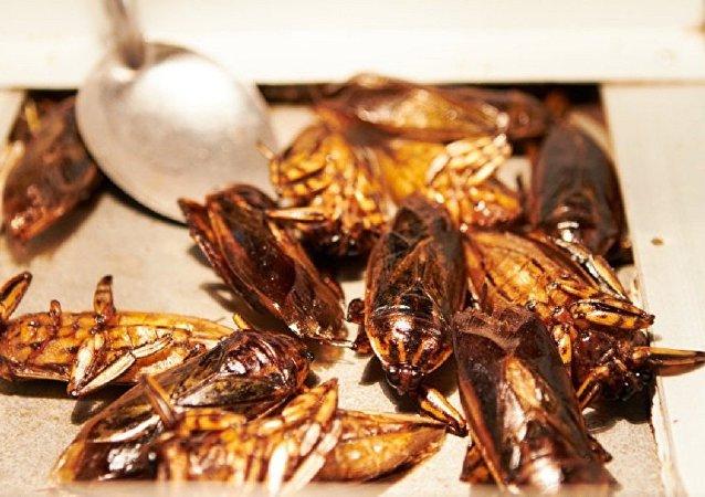 瑞士连锁超市8月将开始销售昆虫馅儿肉饼
