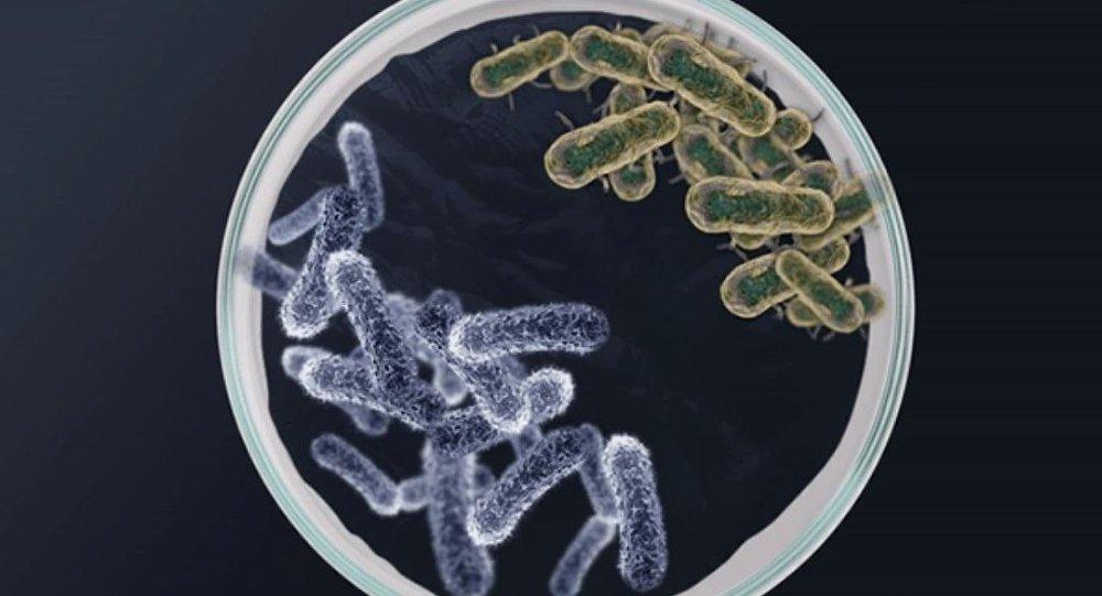 Борьба бактерий в чашке Петри (иллюстрация)