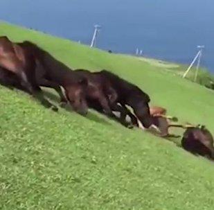 翻滾吧!馬兒們