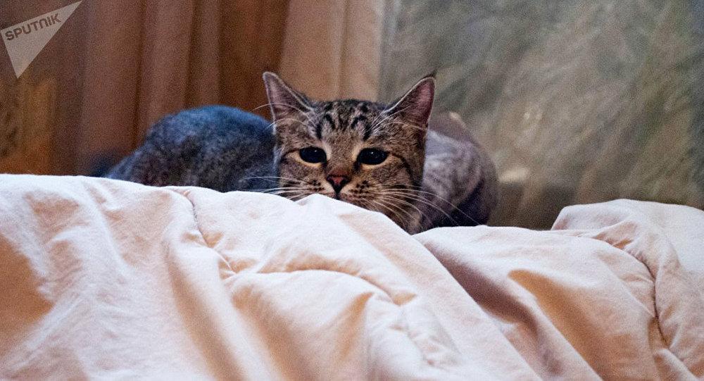 俄科学家发明全球首个猫过敏症疫苗