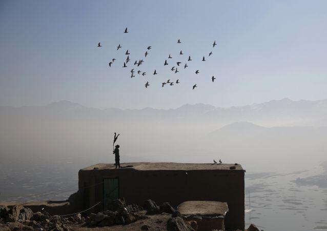 伊朗警方缉获一批走私毒品的信鸽