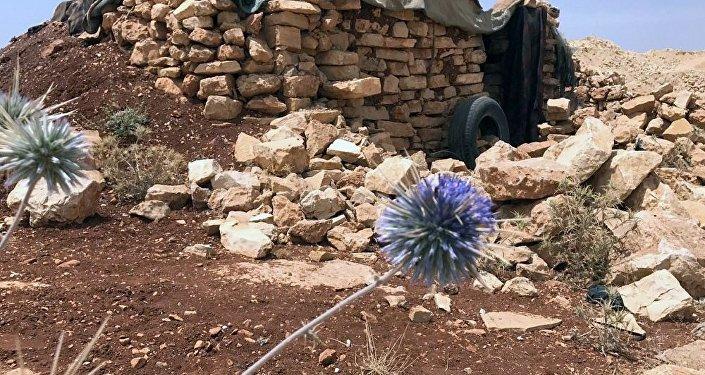 消息人士:叙政府军恢复控制与约旦边境上5座检查站