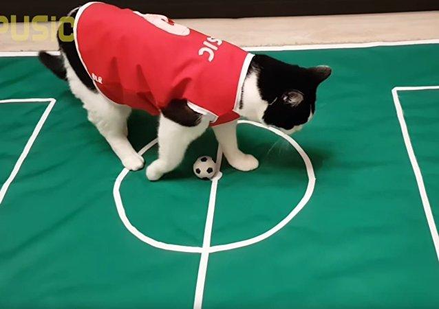 """足球队员""""普西克""""(视频)"""